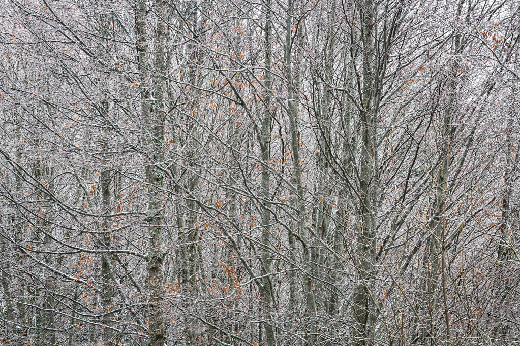 Wald V