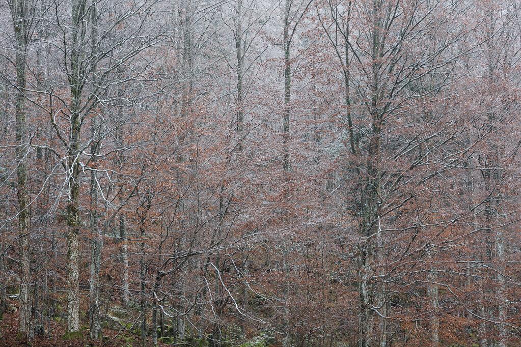 Wald IX