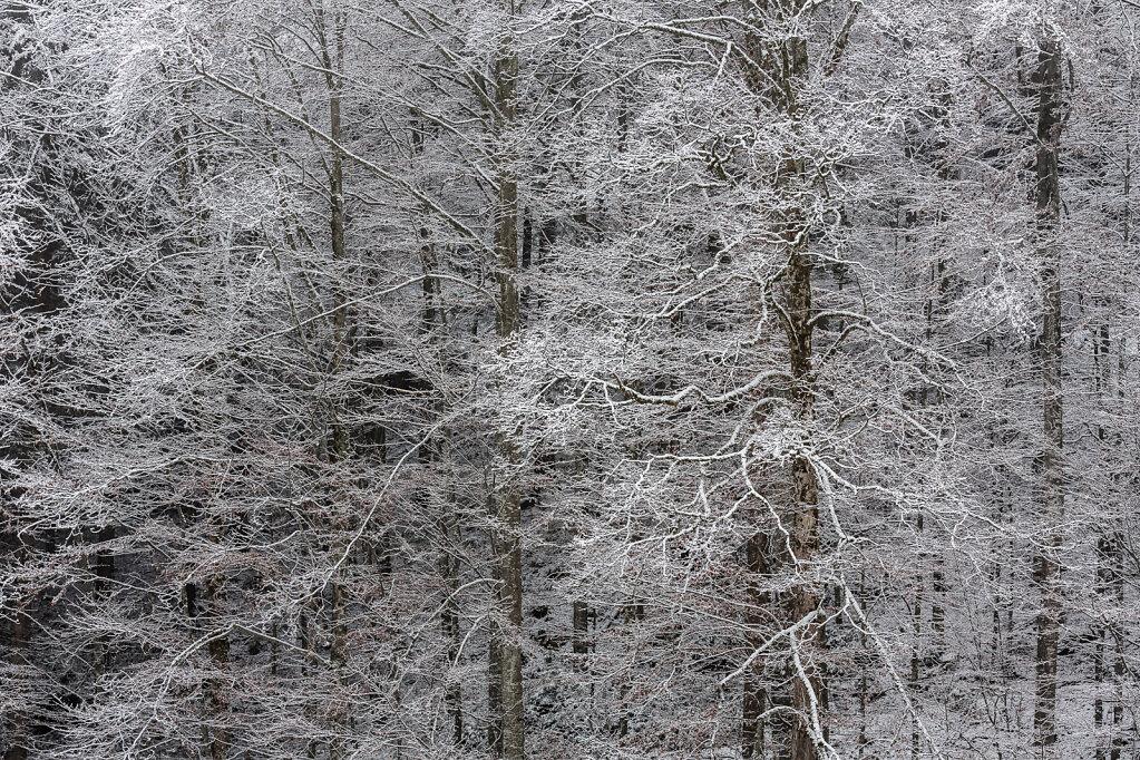 Wald X
