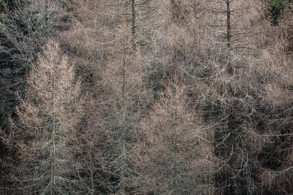 Wald XVII