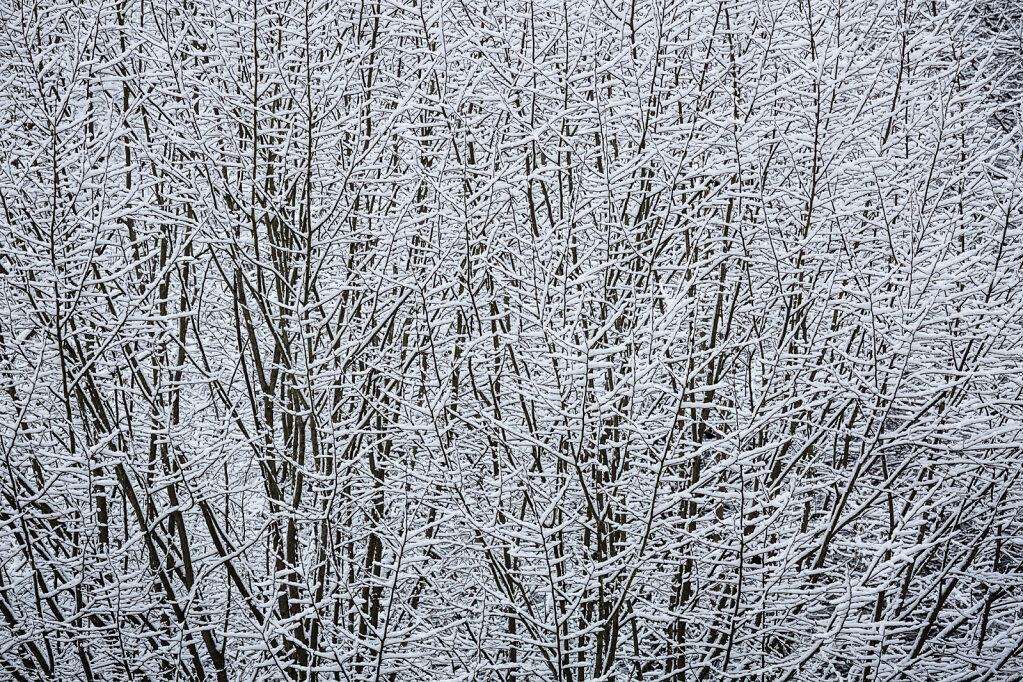 Wald XX