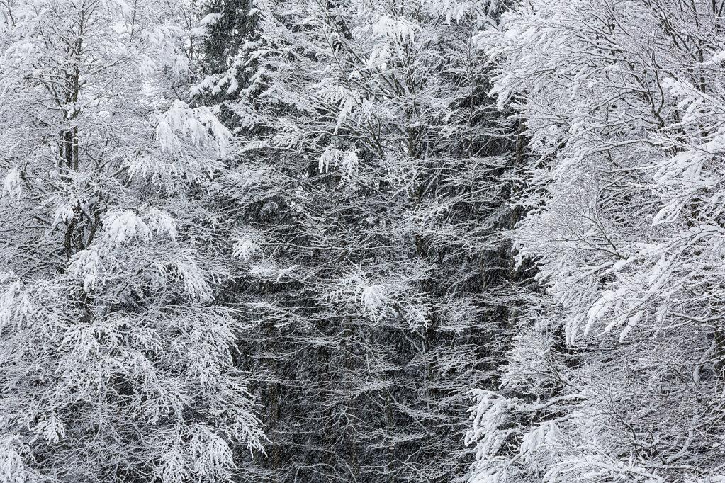 Wald XXII