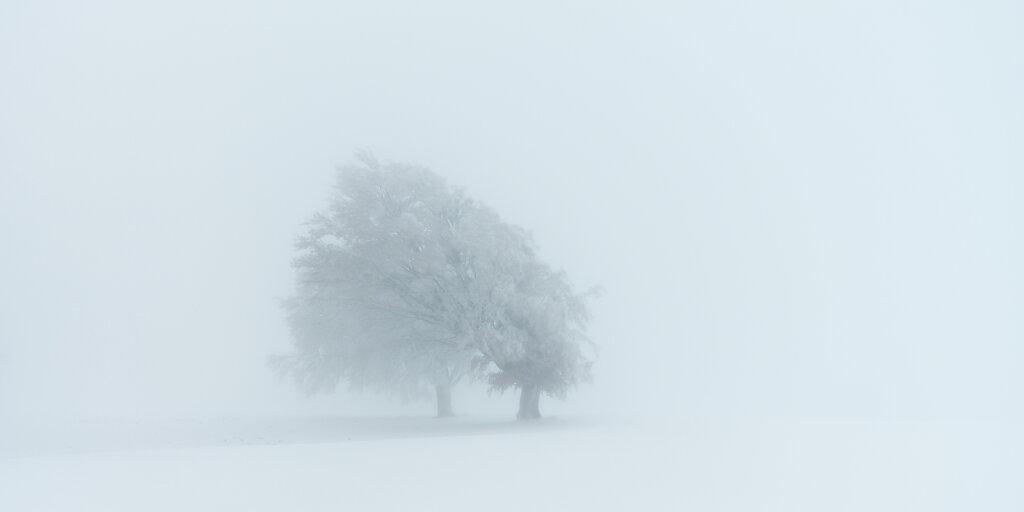 Wetterbuchen