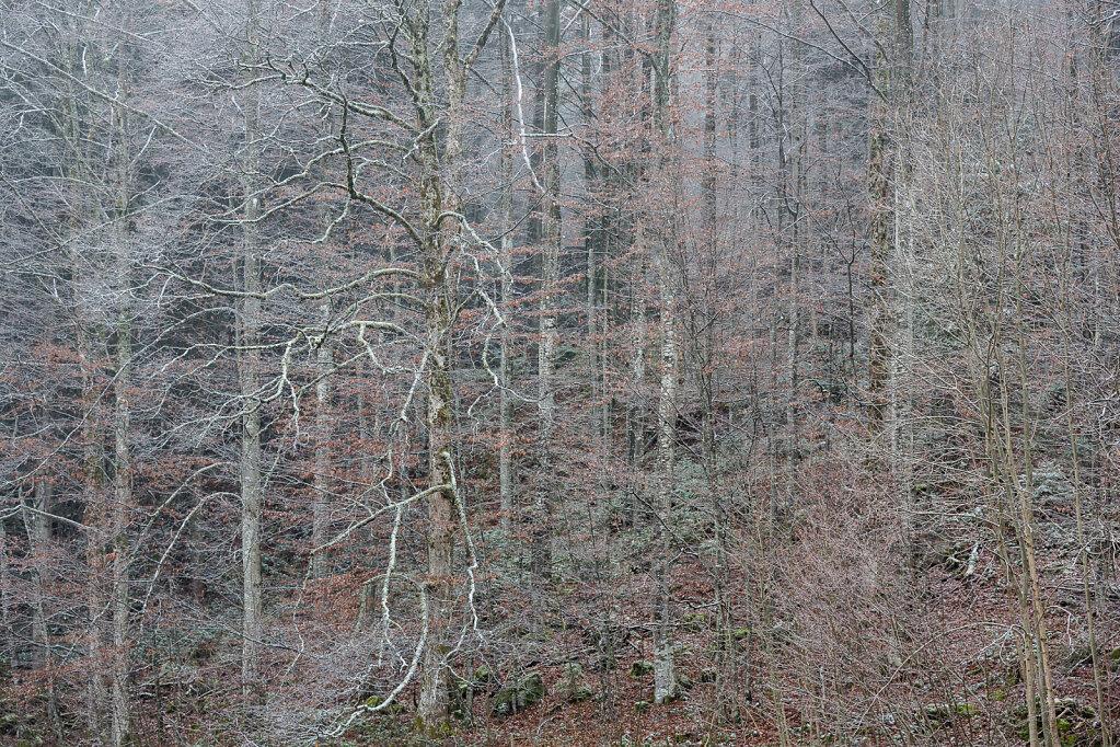Wald I