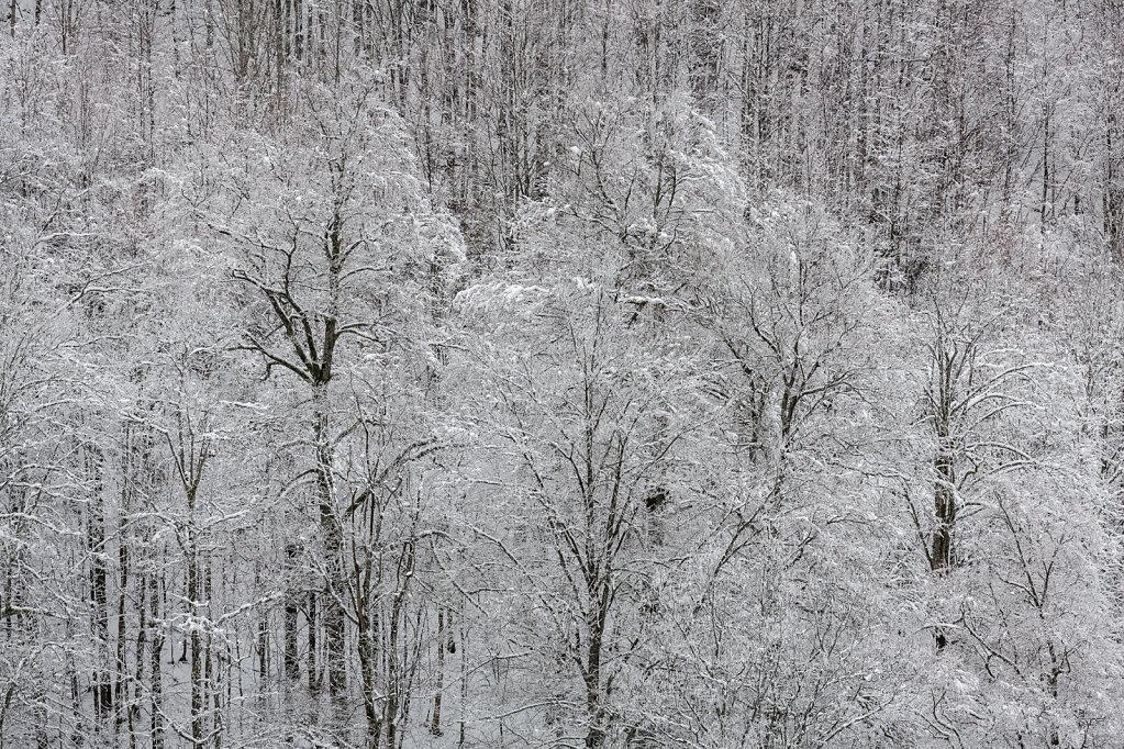 Wald XXV