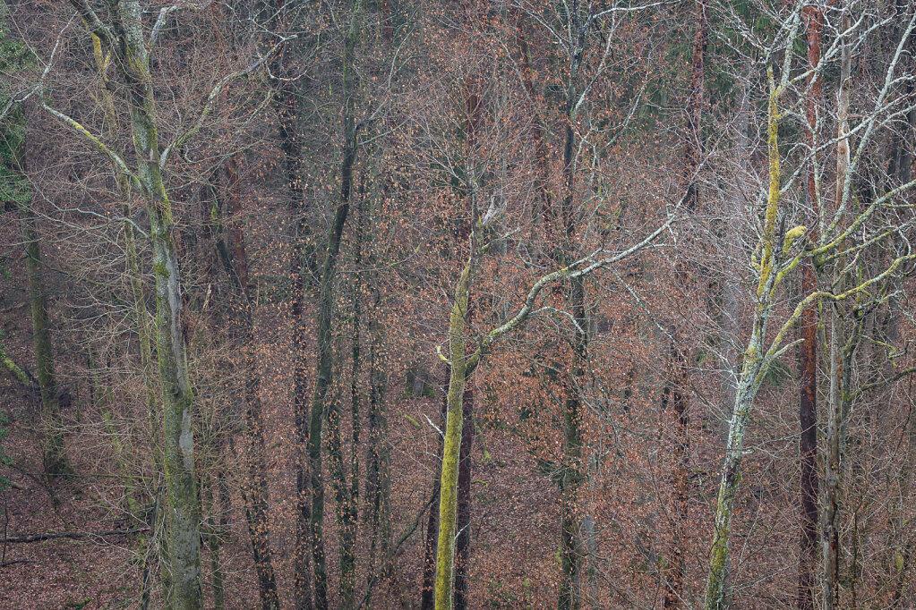 Wald XXVIII