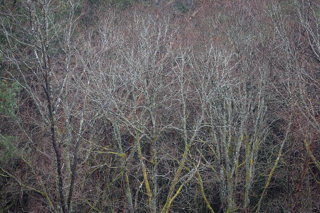 Wald XXX