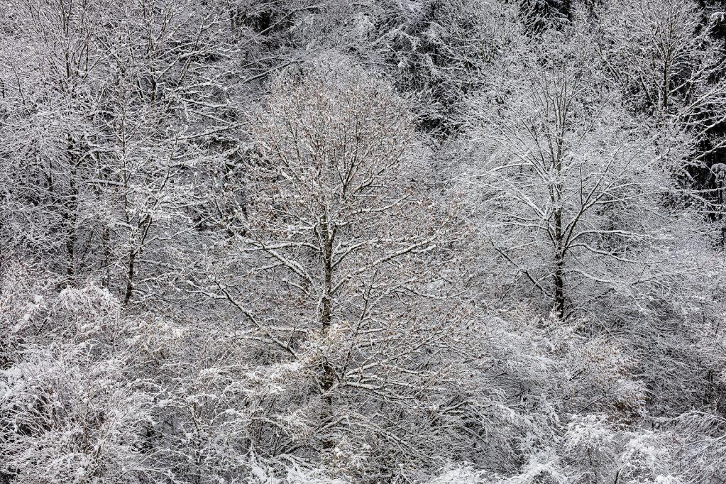 Wald XLIII