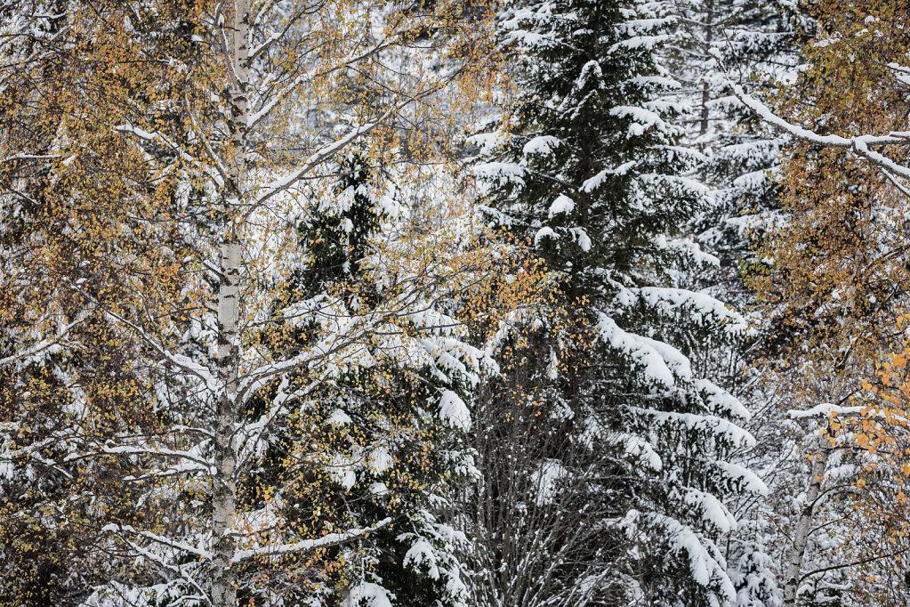Wald XLIV