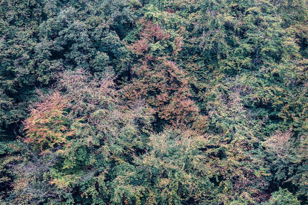 Wald LI