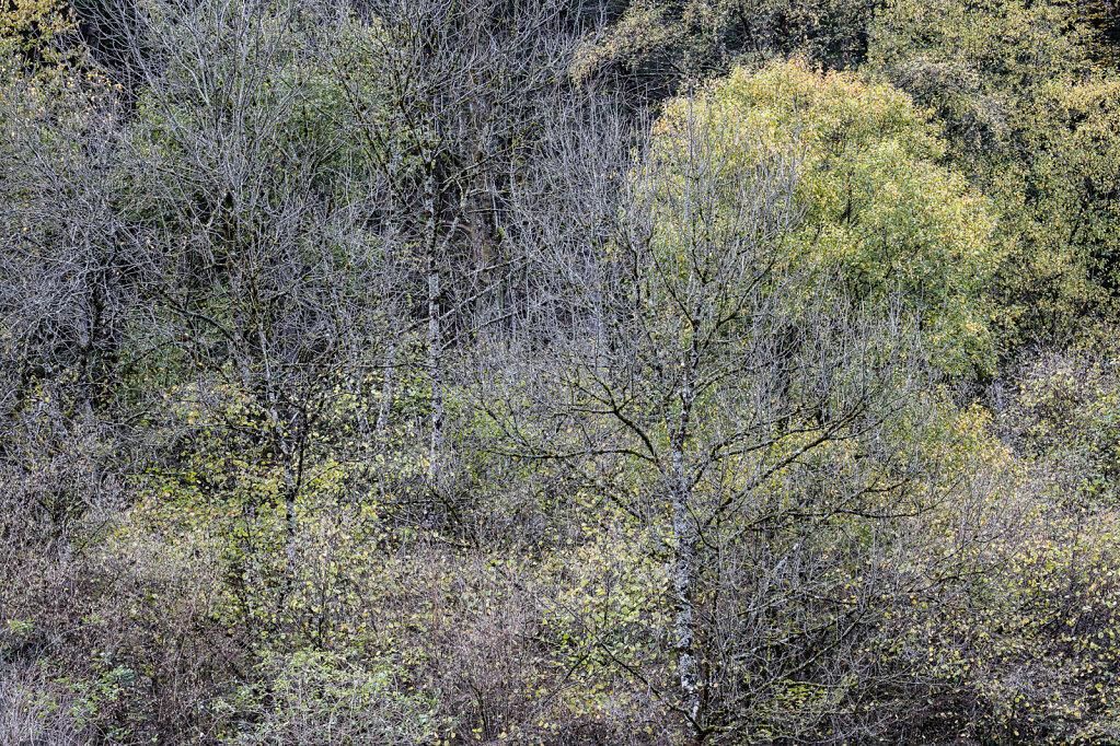 Wald LIV