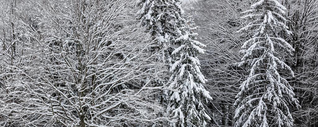 Wald LXI