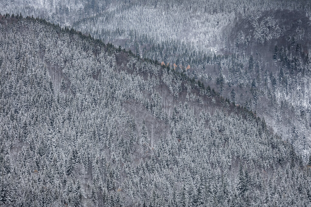 Schwarzwald II