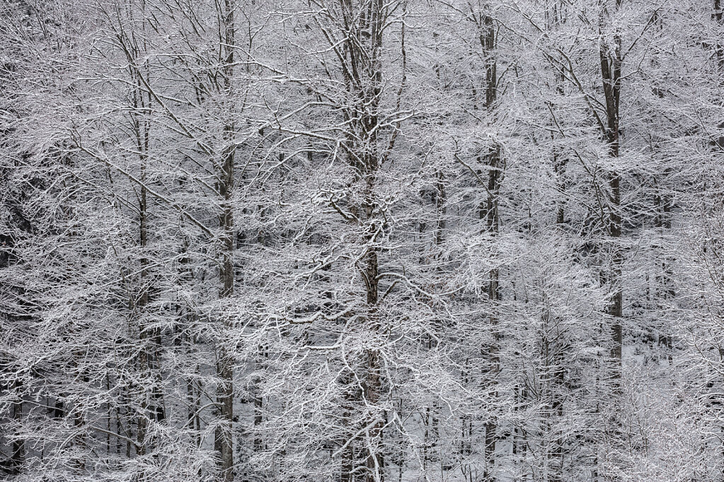 Wald LXII