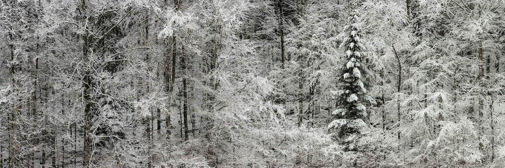 Wald 44