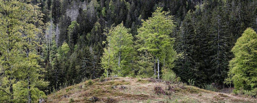 Schwarzwald XXXXV