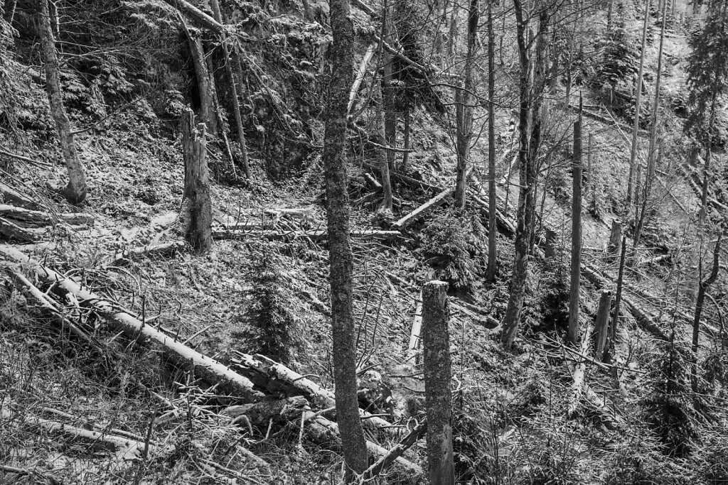 Schwarzwald 74